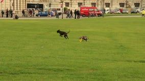 El hombre que lanza el juguete a los perros, animal doméstico lo trae detrás metrajes