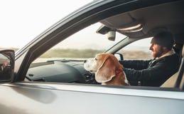 El hombre que monta un coche y a su compañero del perro del beagle se sienta cerca de él en asiento delantero imagenes de archivo