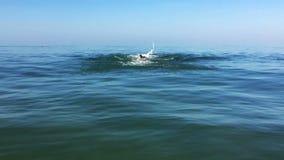 El hombre que se divierte joven nada en el estilo del movimiento de mariposa del mar metrajes