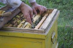 El hombre recoge la miel de una colmena con las abejas Imagenes de archivo
