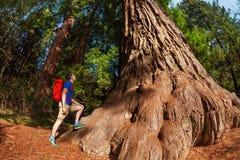 El hombre se coloca cerca de árbol grande en la secoya California Imagen de archivo libre de regalías