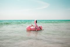 El hombre se está divirtiendo en el flotador inflable de la piscina del flamenco del rosa fotografía de archivo