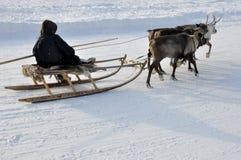 El hombre sledging con los ciervos en la pista nevosa del campo imagenes de archivo