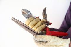 El hombre sostiene los utensilios de jardinería viejos, oxidados Imagen de archivo