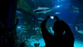 El hombre toma una imagen de un tiburón en el oceanarium almacen de metraje de vídeo