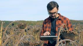 El hombre trabaja con una tableta en un campo, cierre para arriba Concepto dañado de la cosecha metrajes