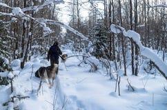 El hombre va a cazar en invierno imagen de archivo libre de regalías