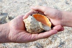 El hombre y el niño guarda el seashell Fotos de archivo libres de regalías