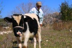 El hombre y la vaca fotos de archivo