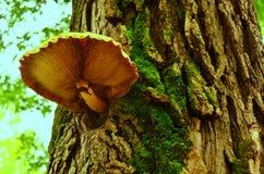 El hongo Imagen de archivo
