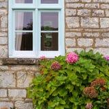 El hortensia rosado florece en el jardín de la cabaña con la ventana azul Foto de archivo libre de regalías