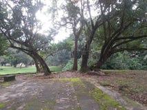El hoy va al parque para un paseo el domingo Today& x27; el tiempo de s es muy bueno Tome muchas fotos Tenga por favor una mirada imagenes de archivo