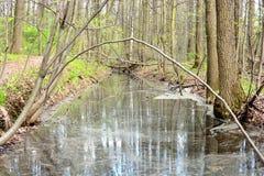 El hoyo en el bosque fue inundado con agua Imagen de archivo libre de regalías