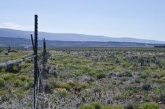 El huésped del paisaje abierto Imagen de archivo
