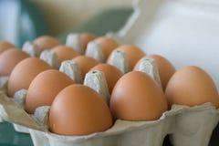 El huevo chiken el huevo Foto de archivo libre de regalías