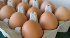 El huevo chiken el huevo Fotografía de archivo