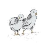 El huevo del polluelo libre illustration