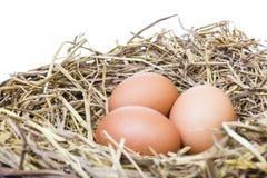 El huevo fresco tres de chiken la granja es bueno para sano en la paja adentro Imágenes de archivo libres de regalías