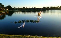 El Ibis blanco americano Imagen de archivo