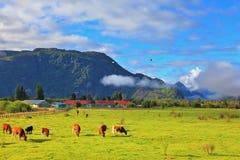 El idilio en Patagonia chilena Imágenes de archivo libres de regalías