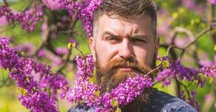 El inconformista disfruta de la primavera cerca del flor violeta Concepto de la fragancia Hombre barbudo con el corte de pelo fre foto de archivo libre de regalías