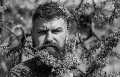 El inconformista disfruta de la primavera cerca del flor violeta Concepto de la fragancia Hombre con la barba y bigote en cara es imagen de archivo