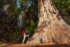 El individuo se coloca cerca de árbol grande en la secoya California Foto de archivo