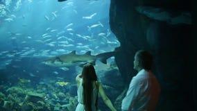 El individuo y la muchacha admiran nadadas de un tiburón en el acuario subterráneo almacen de video