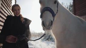 El individuo y la muchacha comunican la situación al lado de un caballo blanco hermoso en el rancho en el invierno Los pares feli almacen de video