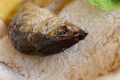Comida tailandesa en pescados del fuego Fotografía de archivo libre de regalías