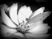 El insecto Fotografía de archivo libre de regalías