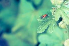 El insecto de la cara del hombre está permaneciendo en la hoja verde en estilo del vintage Imagen de archivo libre de regalías