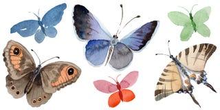 El insecto de la oferta de la mariposa de la acuarela, polilla intresting, aisló el ejemplo del ala Foto de archivo libre de regalías