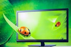 El insecto en fondo verde de 3d TV. Fotos de archivo