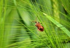 El insecto en la planta Fotografía de archivo