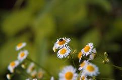 El insecto es relajante Fotos de archivo