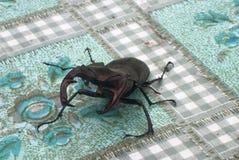 El insecto grande se arrastra en una tabla Imagen de archivo libre de regalías