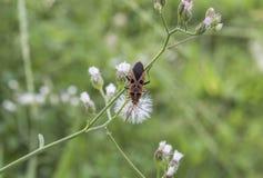 El insecto Hombre-hizo frente al insecto Imágenes de archivo libres de regalías