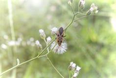 El insecto Hombre-hizo frente al insecto Fotos de archivo libres de regalías