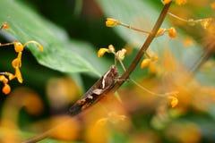 El insecto más frorest del verde de la naturaleza del jardín Foto de archivo libre de regalías