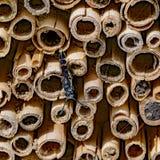 El insecto se sienta en una pared de polos de lámina cortados imagen de archivo