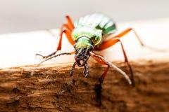 El insecto verde Fotografía de archivo