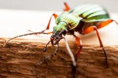El insecto verde Imágenes de archivo libres de regalías