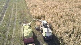 El interruptor aéreo del forraje del campo vierte la masa del maíz en el camión metrajes