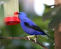 El introducir del pájaro Imagenes de archivo