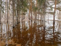 El inundar en el parque Imagen de archivo libre de regalías