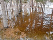 El inundar en el parque Foto de archivo libre de regalías