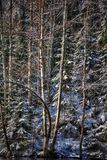 El invierno al aire libre nieva bosque del abedul de los árboles del río Fotos de archivo