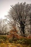 El invierno comienza en bosque Fotos de archivo libres de regalías