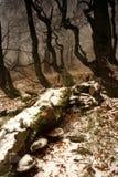 El invierno comienza en bosque Foto de archivo libre de regalías